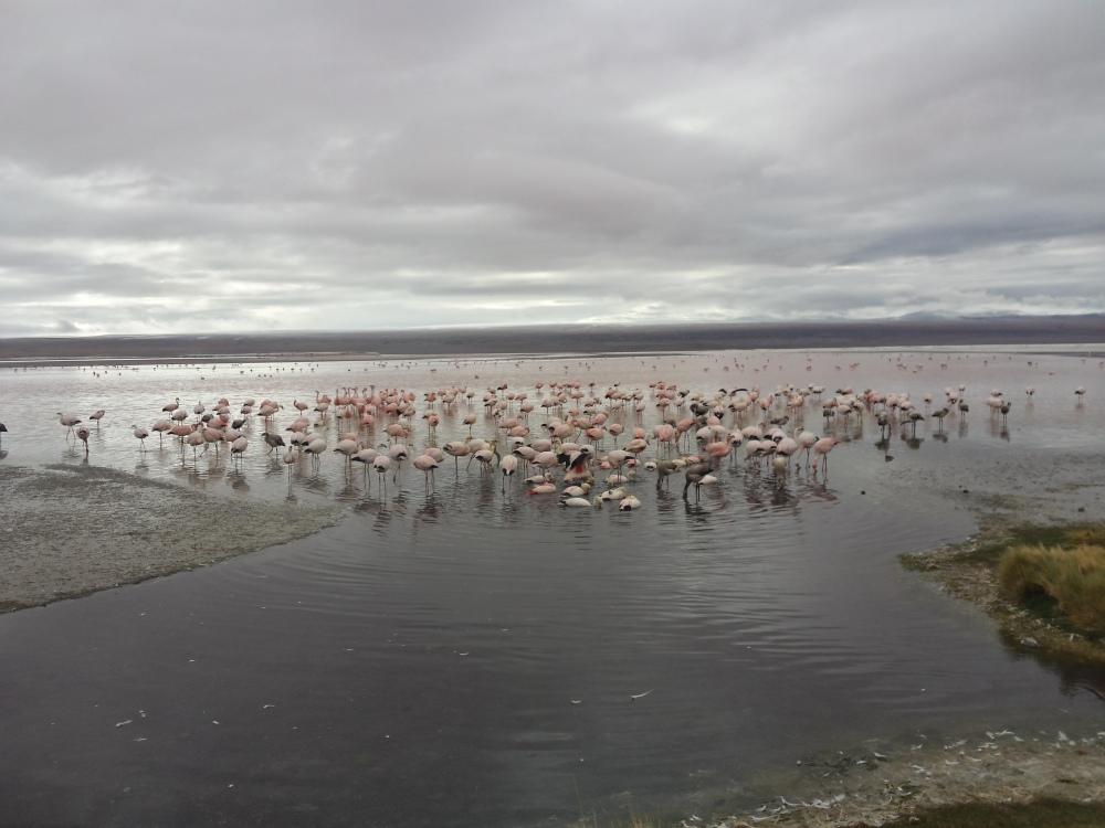 Flamingos por todos os lados