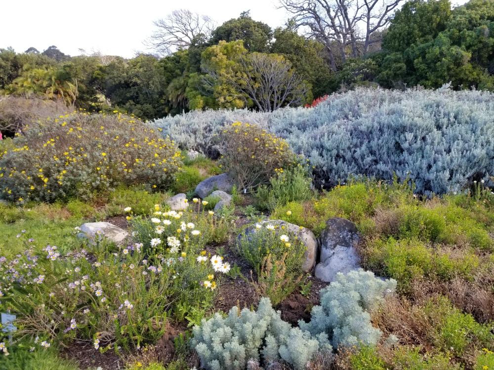 Kirstenbosch Botanical Garden_Cape Town (39)