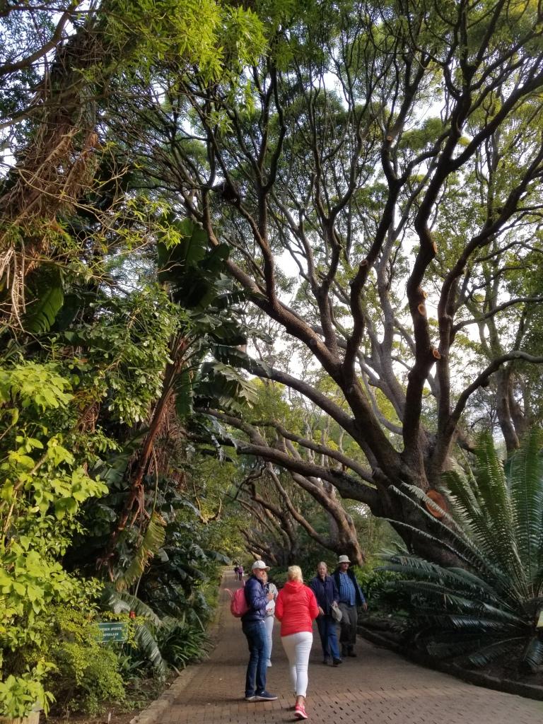 Kirstenbosch Botanical Garden_Cape Town (49)