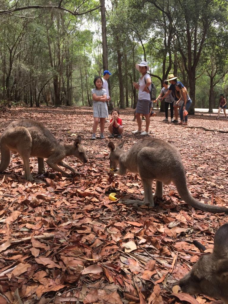 Sydney_Australia_o que fazer (17)
