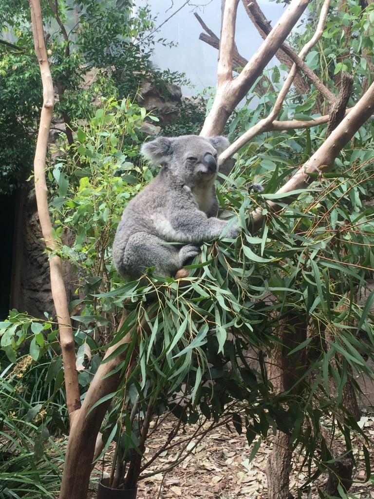 Sydney_Australia_o que fazer (27)